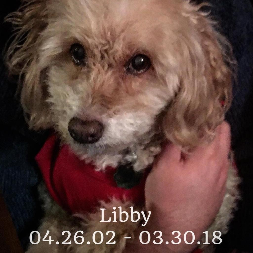 Libby, 04.26.02 - 03.30.18